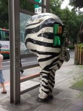 zebrabutt
